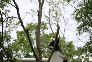 Services for Tree Maintenance
